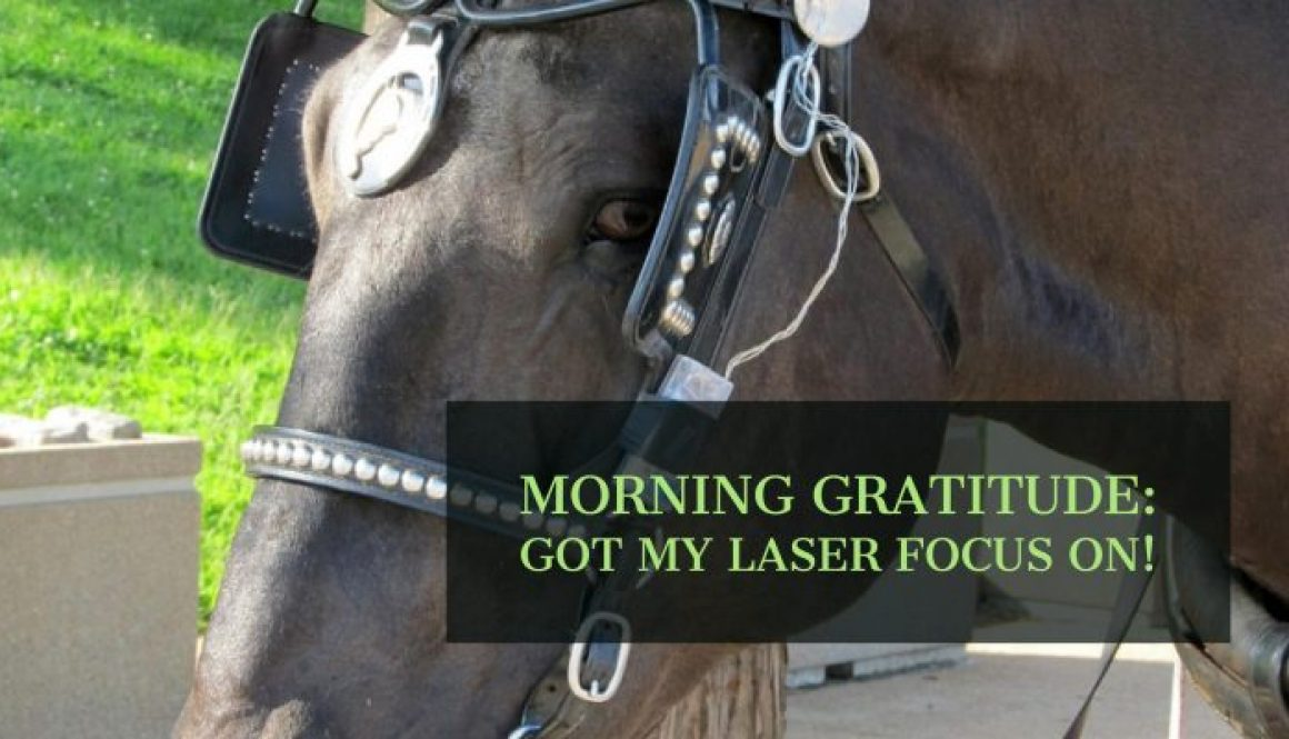horse with blinders. laser focus